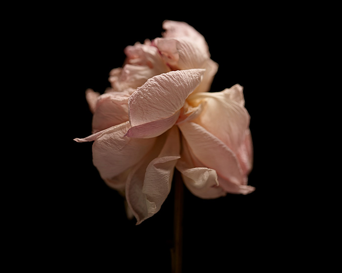 01_131221---Flowers-15102