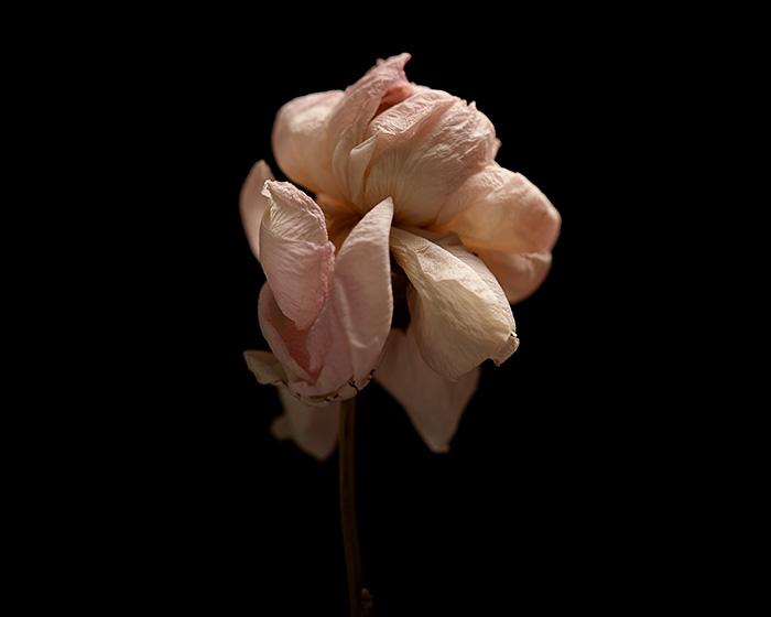 02_131221---Flowers-15094