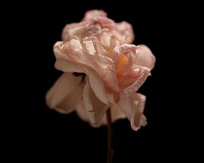 03_131221---Flowers-15117